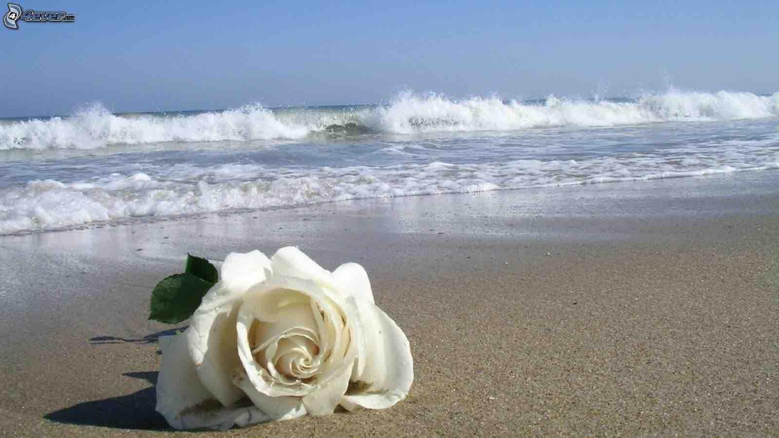 rosa-bianca,-spiaggia-sabbiosa,-mare-232193